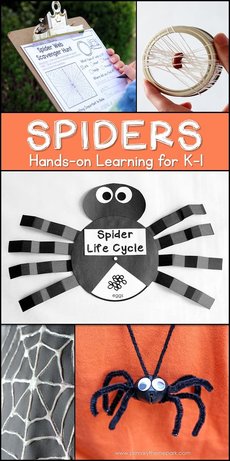 Spider Unit For Kindergarten And First Grade | Seasonal Lesson Plans