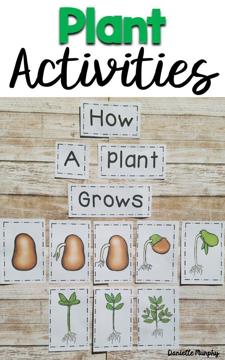 Plant Life Cycle Unit For Kindergarten First Second Grade | March