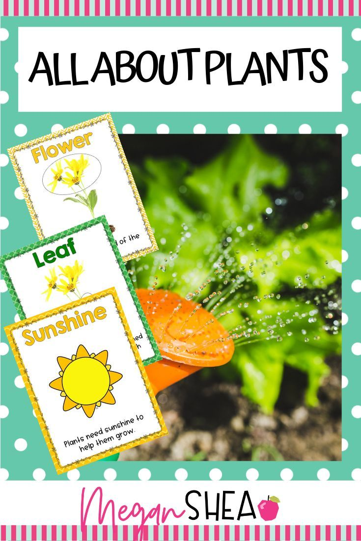 All About Plants: A Plant Unit For Kindergarten Or First