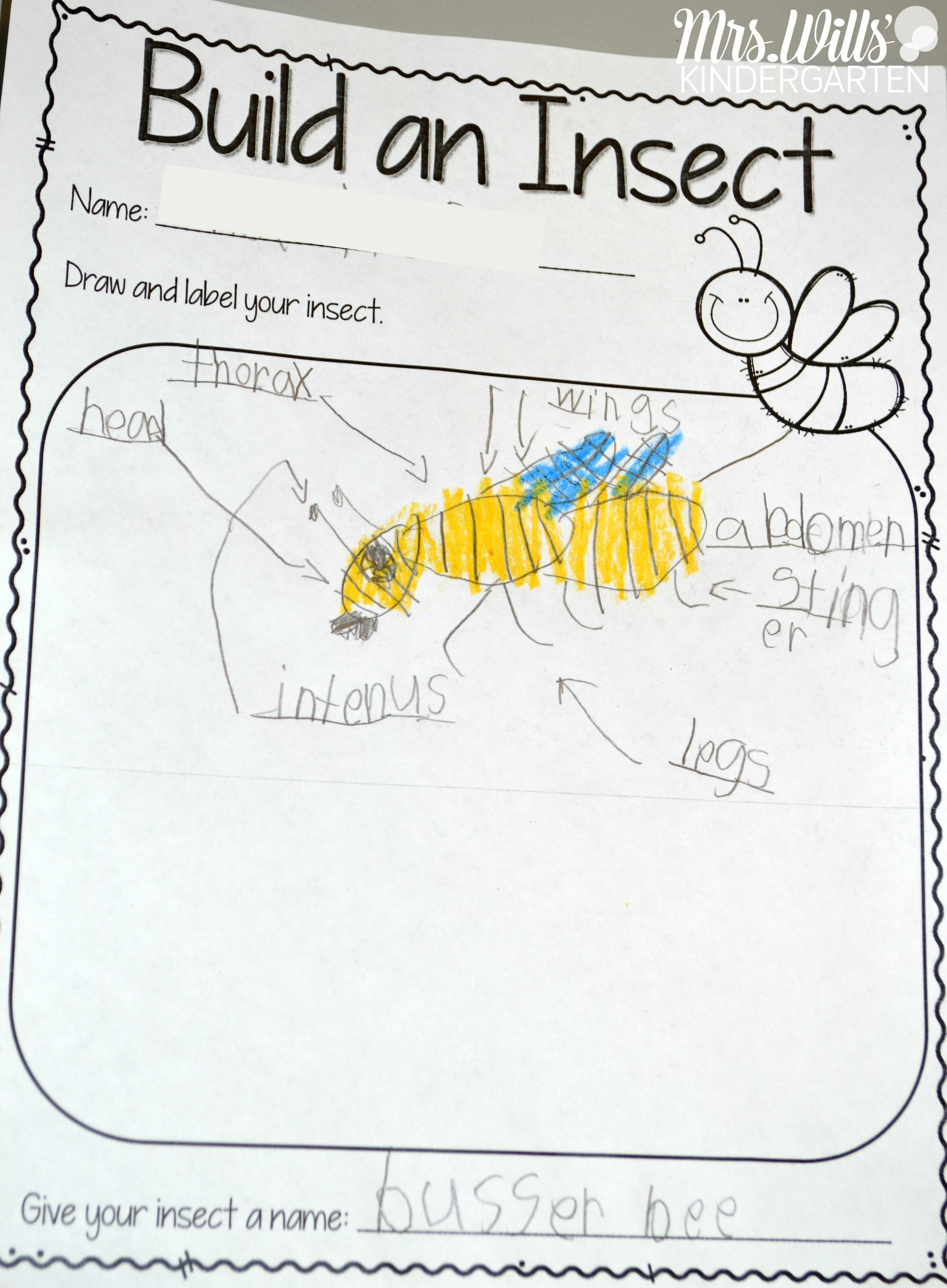 Insect Lesson Plans | Kindergarten Lesson Plans